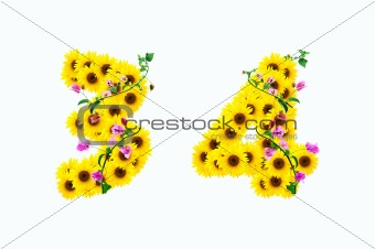 sunflower numbers 3 4 isolated on white background