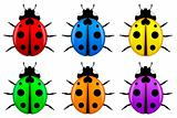 Ladybugs in Different Colors Isolated