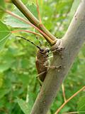 Large beetle on trunk