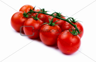 Tomatoes cherry on a green branch