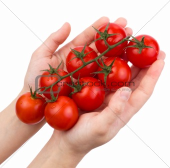 Tomatoes cherry on a green branch in female hands