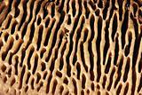 Texture agaric macro, mushroom