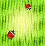 Spring ladybugs