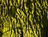 Close up of green mossy bark on tree