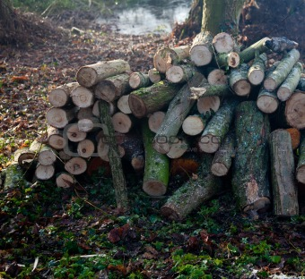 Backlit pile of cut logs