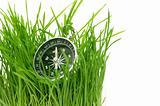 compass in green grass