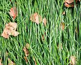 Laid grass