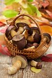 Woods mushrooms in woven basket on wooden  table in autumn