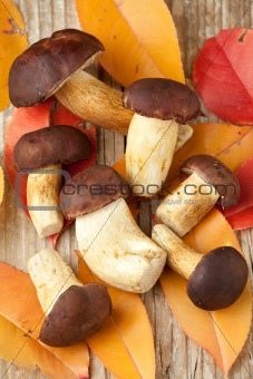 Woods mushrooms and yellow autumn leaves on the  wooden  backgro