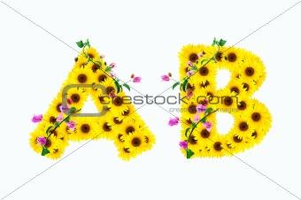 sunflower alphabet A B isolated on white background