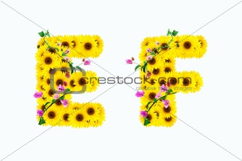 sunflower alphabet E F isolated on white background