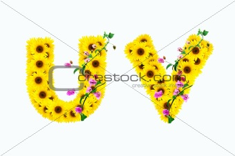 sunflower alphabet U V isolated on white background