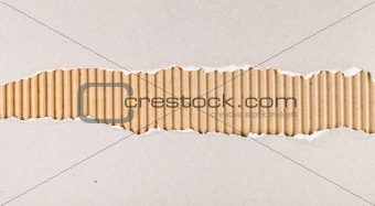 Torn cardboard texture with great detail