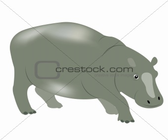 Animal hippopotamus