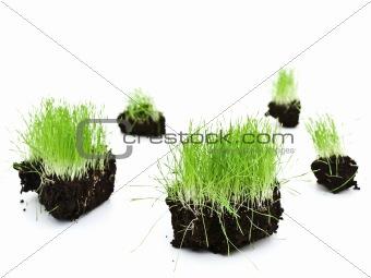 green grass islands