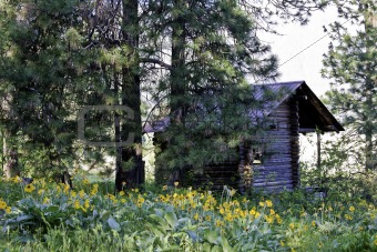 Cabin in the Meadows