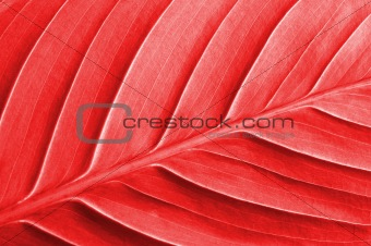 abstract colored leaf texture