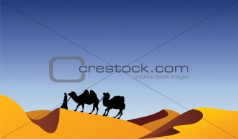 camels and bedouin