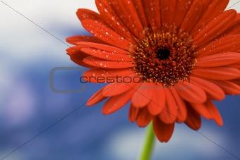 Beautiful daisy against the sky