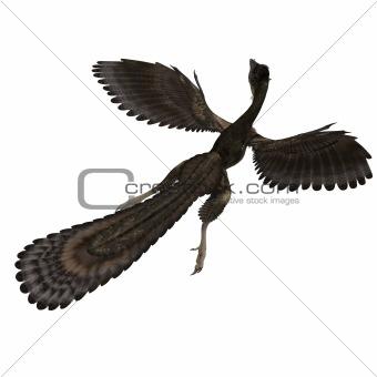 Dinosaur Archaeopteryx