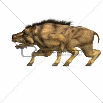 Dinosaur Daeodon Dinohyus