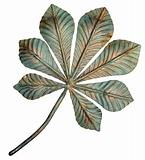 Bronze chestnut leaf. 