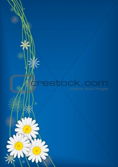 Three daisies on blue vector background