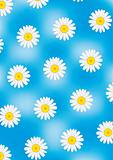 Camomile on blue vector background