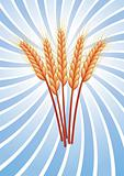 vector wheat ears