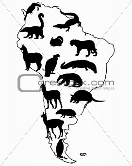 Animals South America