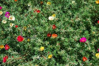 Small florets