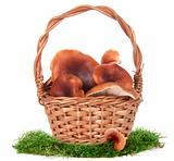 The image of a basket with the mushrooms, isolated, on a white b
