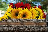 Sunflowers on a picnic basket