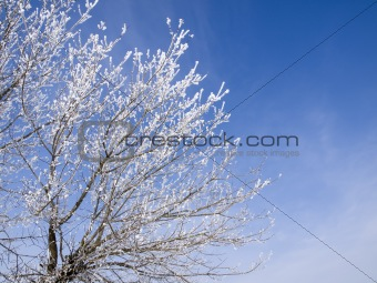 Branches of a tree in the winter