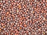 Seeds of black mustard