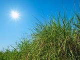 Green grass, sky and sun