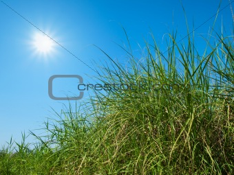 Green grass, sky and sun