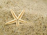 Starfish ashore