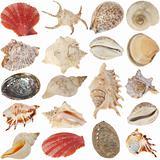 Shells-set