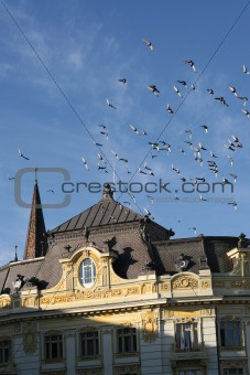 old bulding and flying pigeons