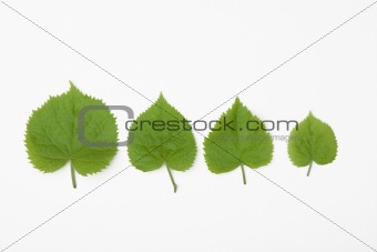 for different leaves