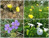 Flowers, wildflowers