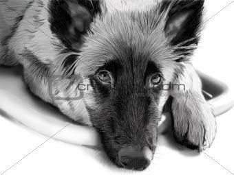 Sketched dog