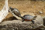 Turtles in zoo