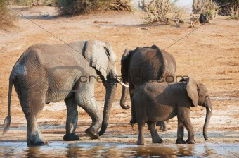 Group of Large and small African elephants