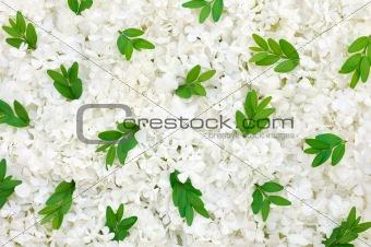 Guelder rose blossoms and myrtle leaves - background