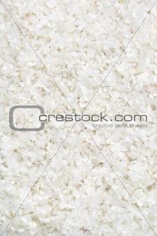 Guelder rose blossoms - background