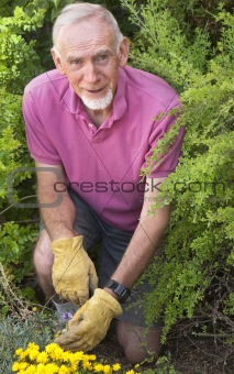 Active senior man tending his garden