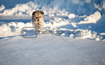 Small puppy in snow