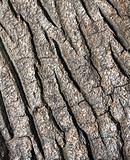 Tree bark texture - detail - background